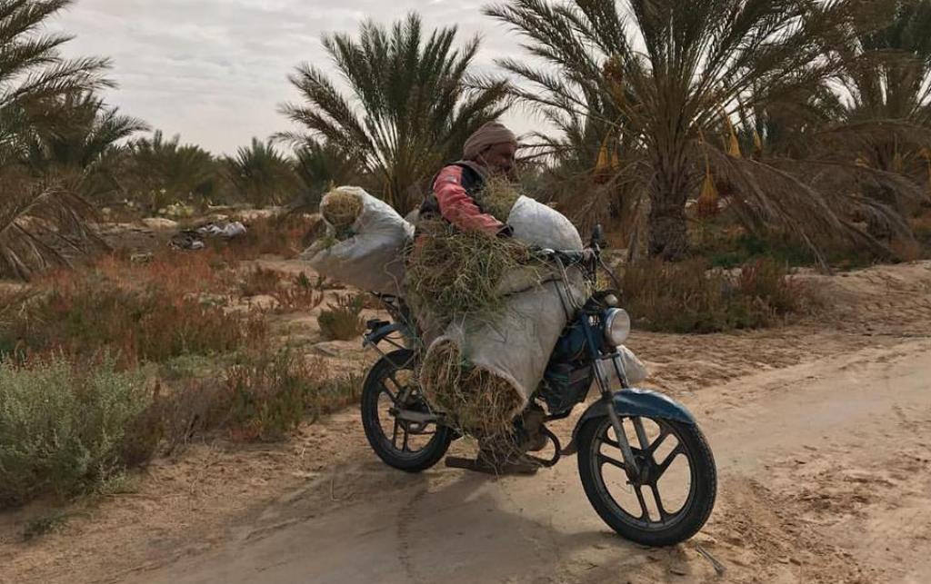 A man carries bundles on a sand road amidst palms.
